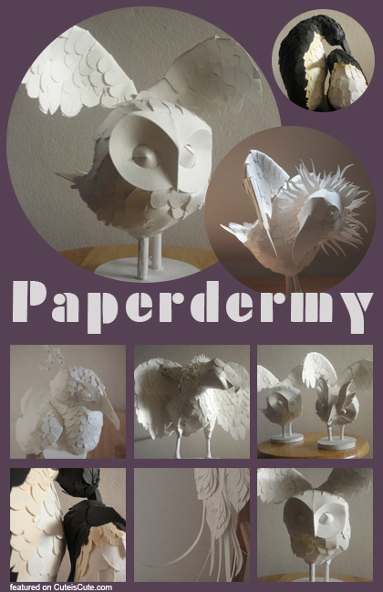 Paperdermy animals